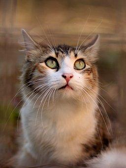 cat-3280519__340