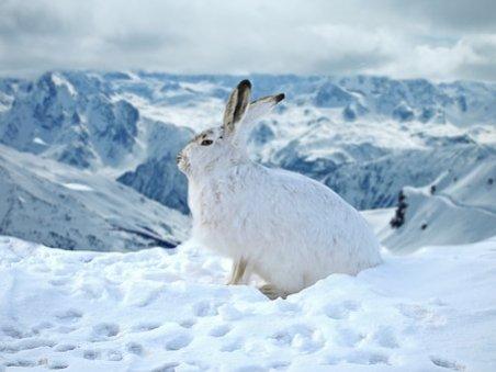 rabbit-3053514__340