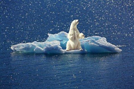 polar-bear-2199534__340